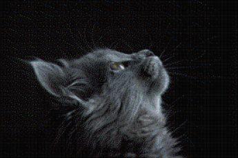 grey-cat=looking-up